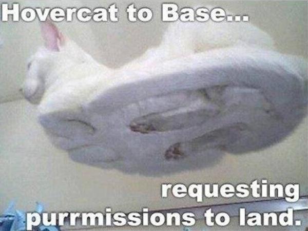 Funny Meme Hi : Funny cat memes cat memes
