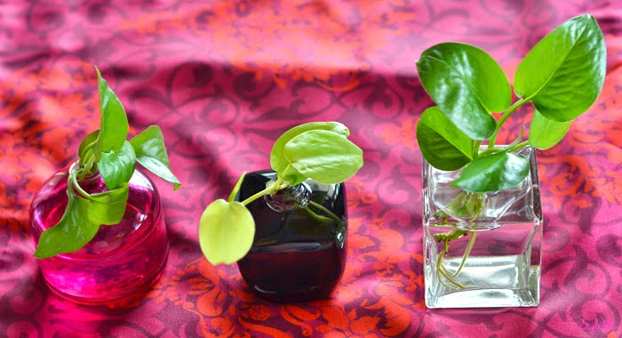 Dayle Pereira of Style File India displays her Do It Yourself project of perfume bottle planters in glass bottles with green saplings for decor, DIY gift ideas and mothers day gifting