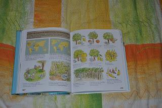 Unde se cultivă portocali şi bananieri?
