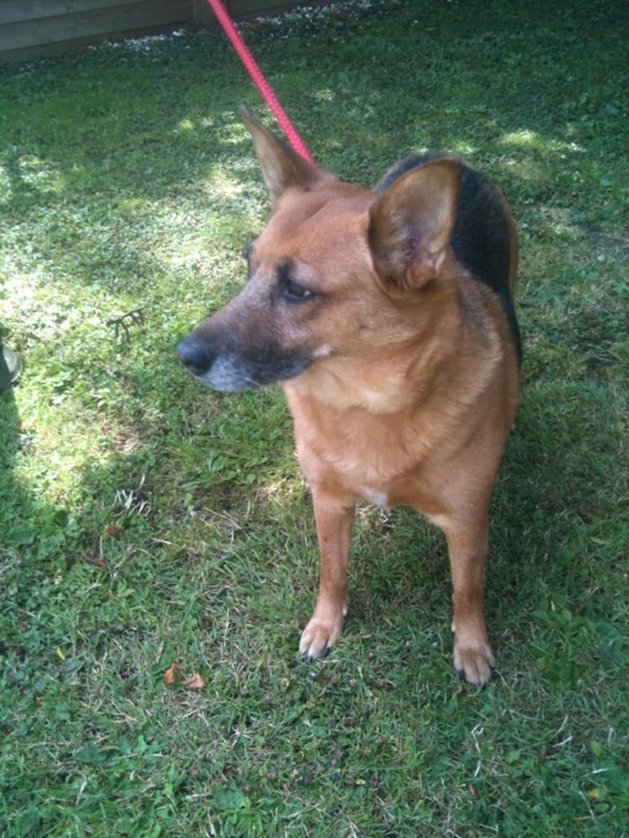 Dogs For Rehoming Near Milton Keynes