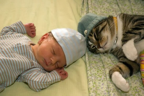 Funny cats - part 78 (35 pics + 10 gifs), cat pics, cat sleeps with human baby