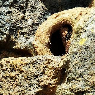Ninho de João de Barro em meia às ruínas da redução de São Lourenço Mártir.