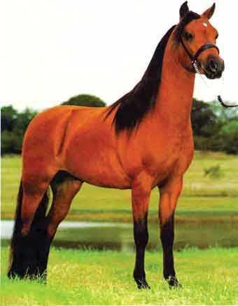 תמונות של סוסים