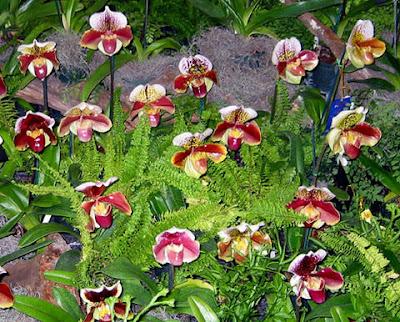 Tipos de Orquídeas Terrestres