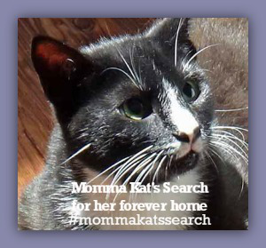 Brave Momma Kat needs a home... Can you help?