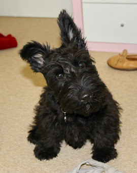 OUR SCOTTIE DOG, GRACIE