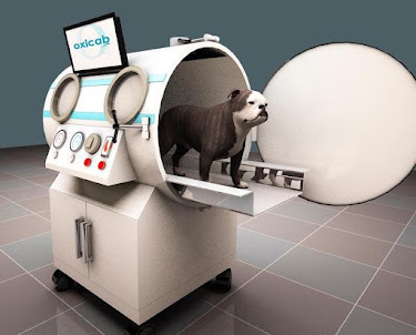 India. Small animal veterinary hyperbaric oxygen therapy (HBOT) chamber.