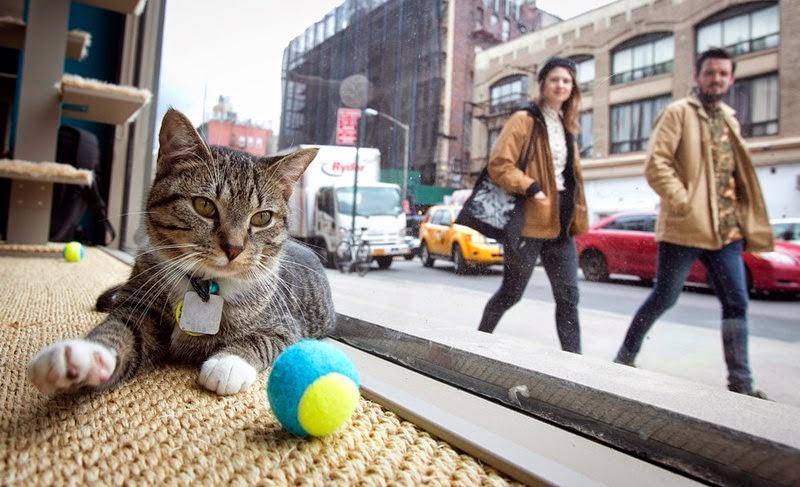 Cat cafe in New York