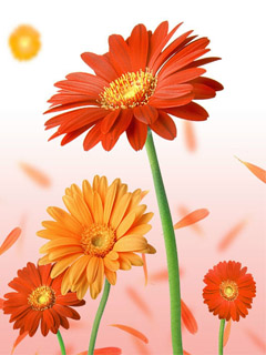 Flowers 240x320 Mobile Wallpapers 2