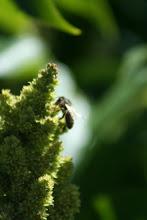 Le jardin d'Hélène participe aux semaines régionales de l'environnement
