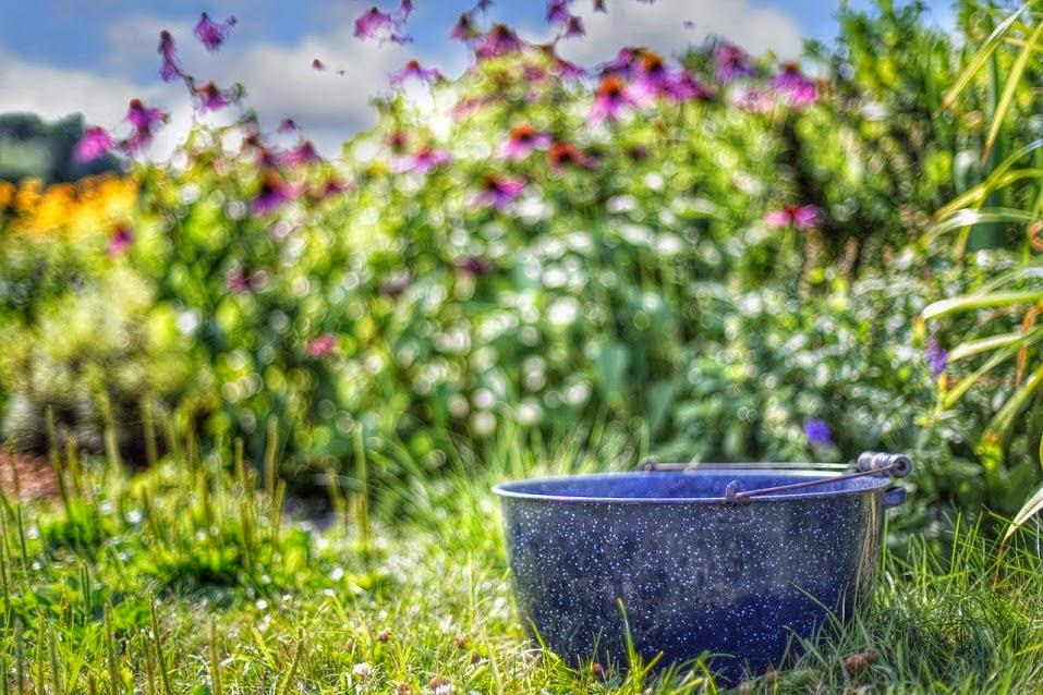 bebidas orgánicas, análisis y beneficios