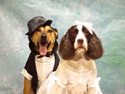 Addestramento cinofilo differenza tra cane meticcio e for Tequila e bonetti cane razza