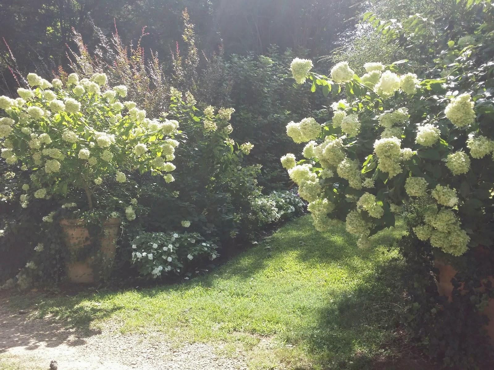 TARA DILLARD: Hydrangea