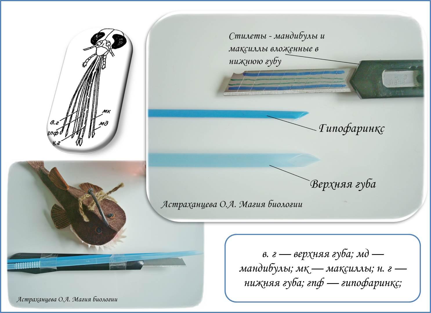 Гипофаринкс