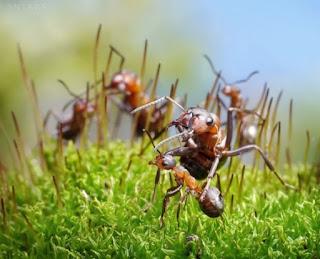 Hormigas ( II ) El hormiguero más grande el mundo. Foto: Pavlov. Lacasamundo