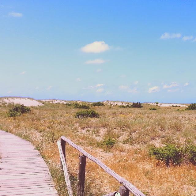 dune di sabbia parco san rossore-massaciuccoli