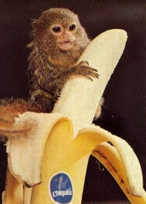 أصغر الحيوانات في العالم 07.jpg