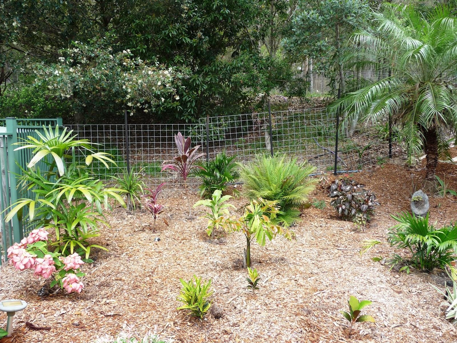 tropical garden from scratch - Tropical Garden 2016