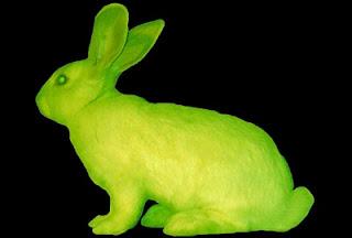 Proteina verde fluorescente: Conejo Alba