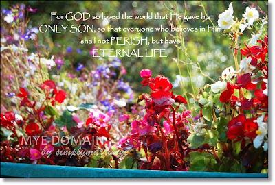 mye domain's photo_john 3:16