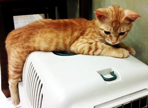 Kucing Comel Eh Aku Punya Xlah Comel Sangat