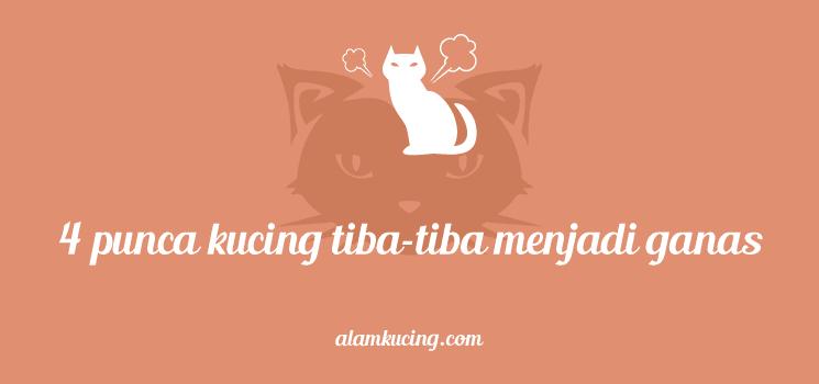 Mengapa kucing bersikap agresif