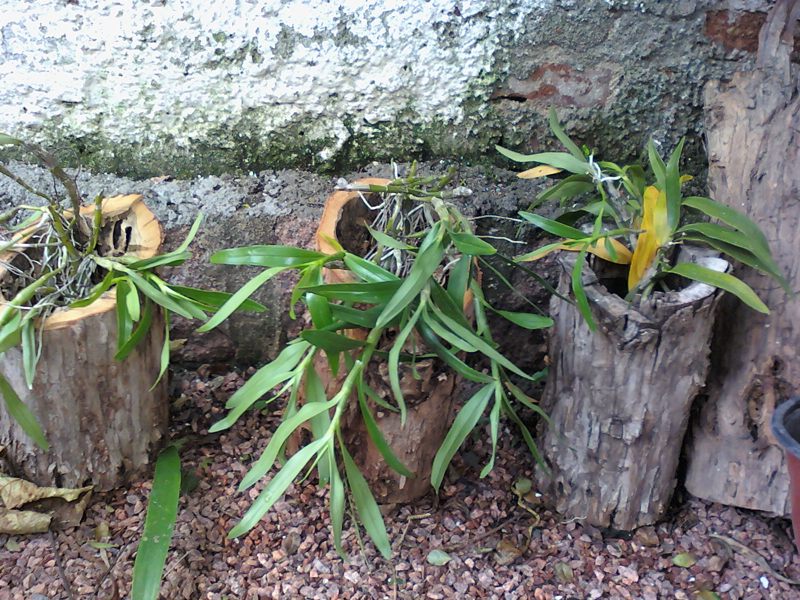 Decorar sustent vel jardins for Petunie inverno