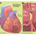 Jantung dan Stroke? Oh No!