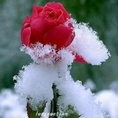 leng xuetian(冷雪天)