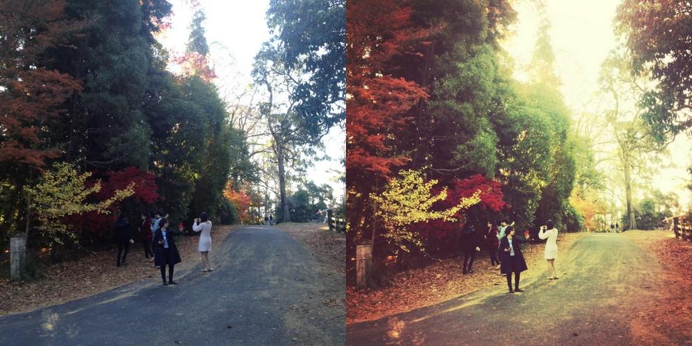 mount wilson autumn trees