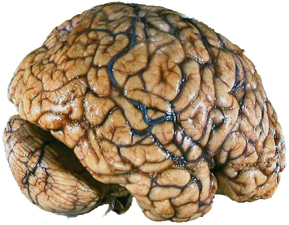 brain affected by smoking - photo #32