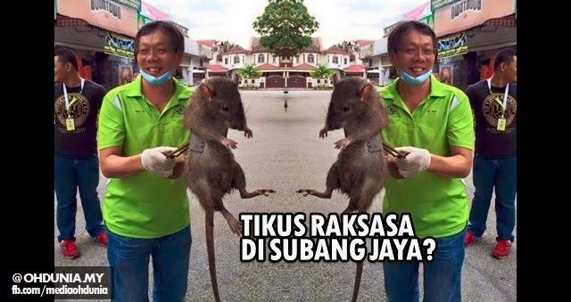 Speaker Selangor nafi wujud tikus raksasa selepas gambar tersebar