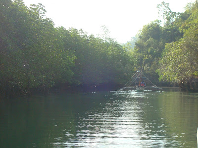 pump boat in the middle of mangrove trees