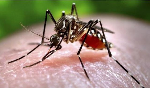 Sambutan Hari Nyamuk Sedunia - Bahaya Denggi