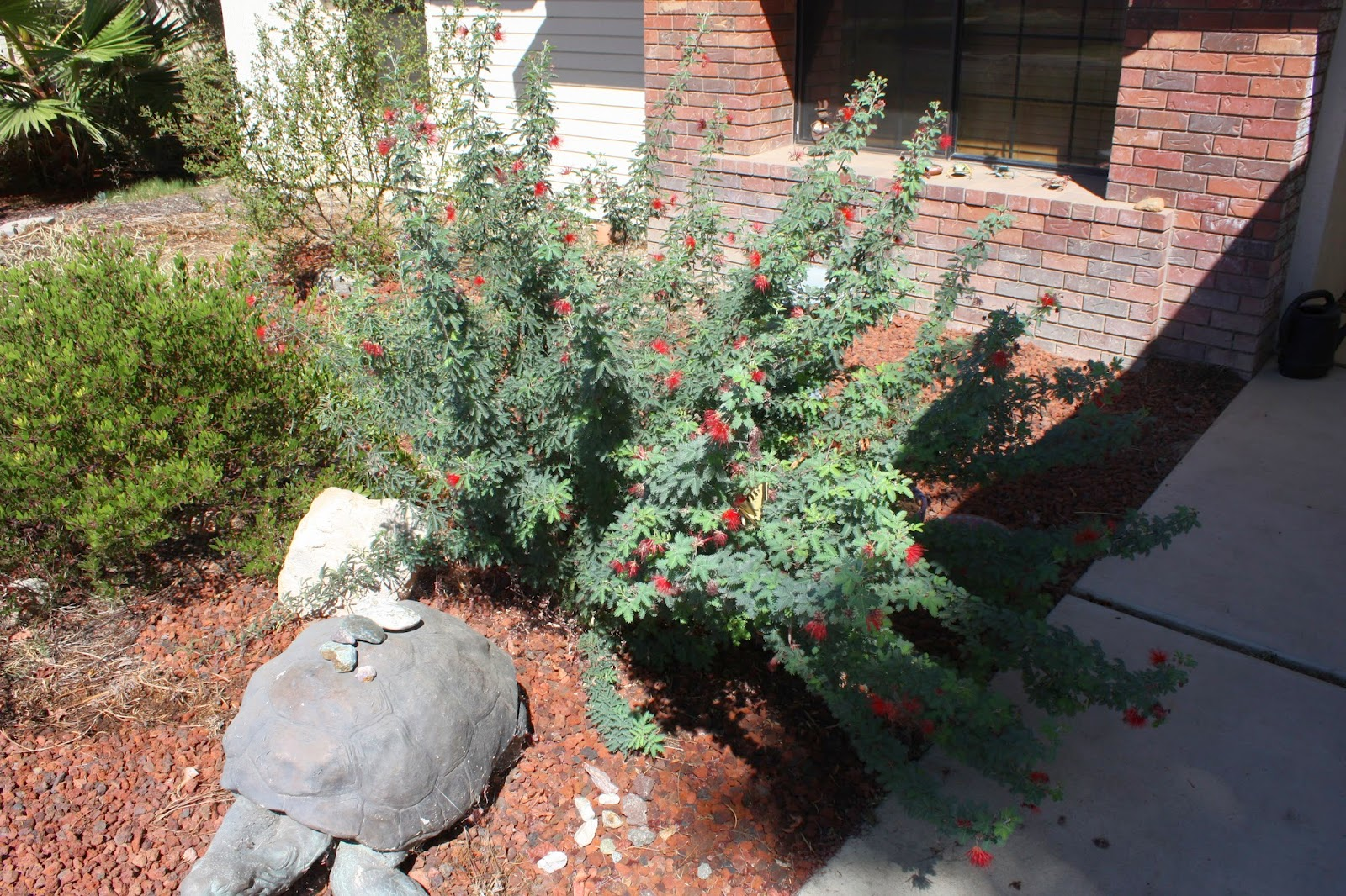 All In This Is A Great Plant For Bakersfield Gardens
