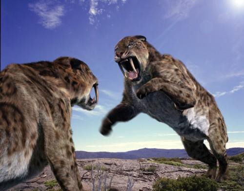 Smilodon ( Sabre-toothed Tiger)