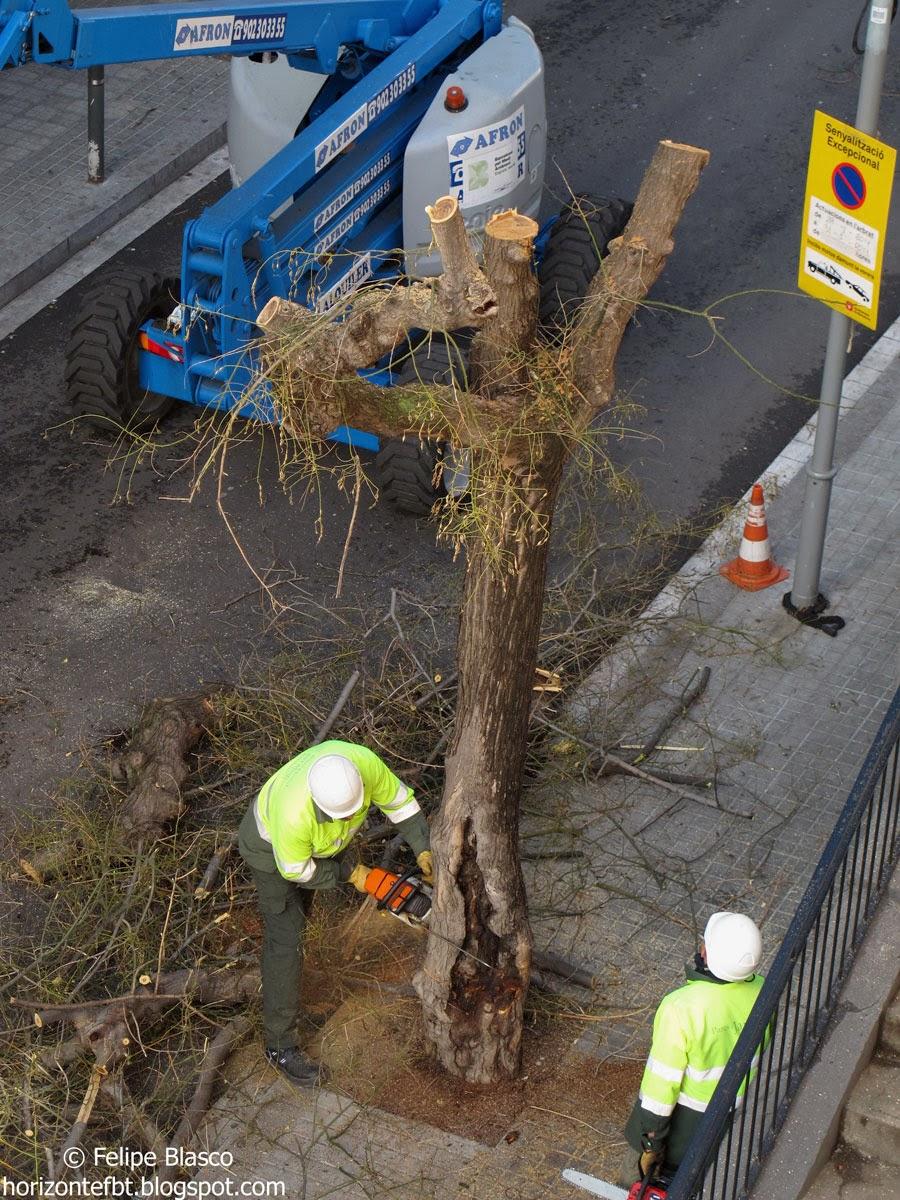 Secuencia de la tala de un árbol