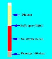 Nilai Hematokrit Darah