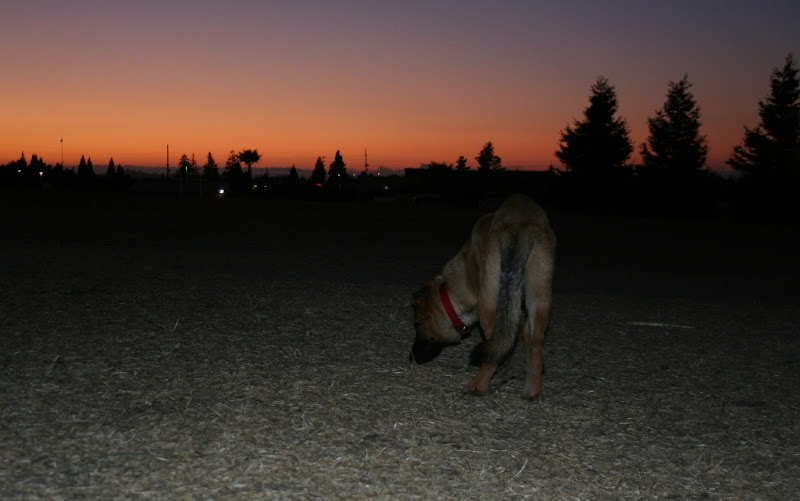kira standing alone and sniffing, same dark sky with orange as in photo above