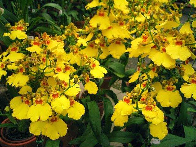 Debido a este significado, las orquídeas blancas son muy populares en la decoración de bodas y en el ramo de la novia.