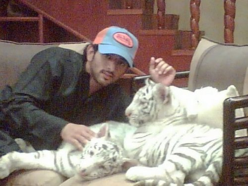 tiger21%255B1%255D.jpg