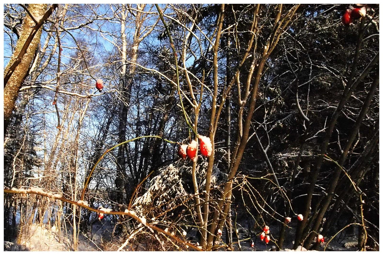 Winter branch2