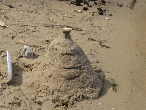mystery snail shell
