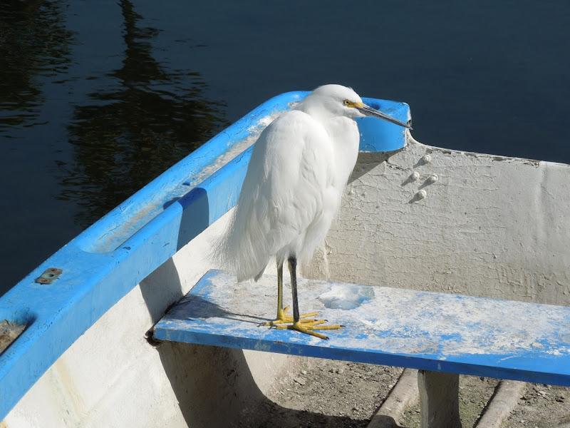 Venice Canals birdlife