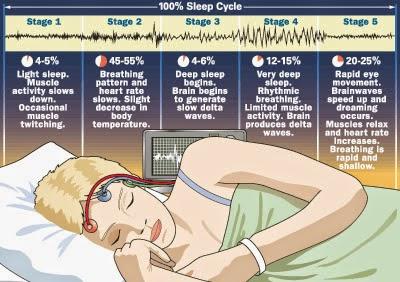 fazele somnului