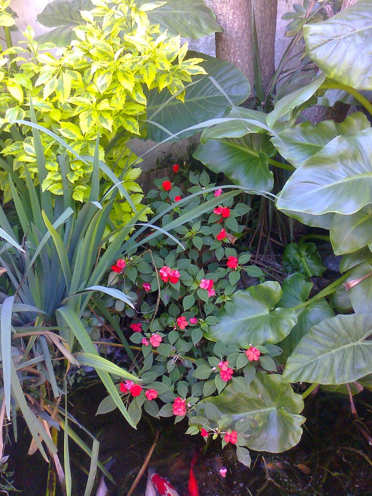 Plantas para sector de mediasombra for Patios con plantas