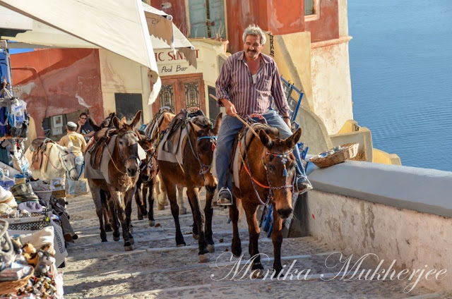 Donkey in Fira Santorini Greece by Monika Mukherjee