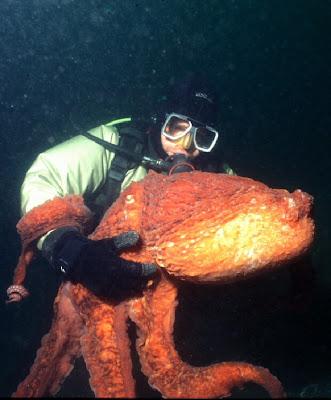 http://4.bp.blogspot.com/-WrwvrI-pMFw/TWUPTH3uIzI/AAAAAAAAAGk/Ir0OSo94nBM/s1600/octopus.jpg