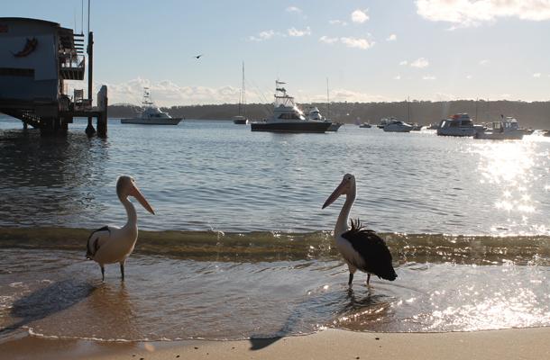 Sweet Monday, Watson's Bay, Sydney