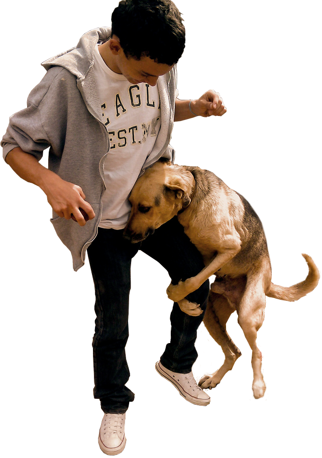 Can More Than One Person Train A Dog